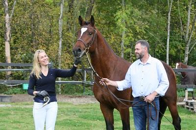 Årets toårs spranghingst 2015 Heartland B (Heart Ache BS/Holland)  Oppdretter: Bente Tveita