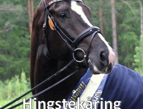 Katalog og tidsprogram for hingstekåringen
