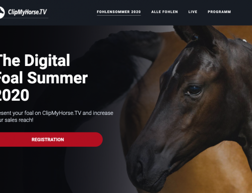 The Digital Foal Summer 2020