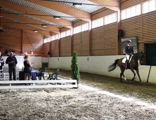 Hva er en 3-årstest? Hva skal du gjøre og hva forventes av hesten?