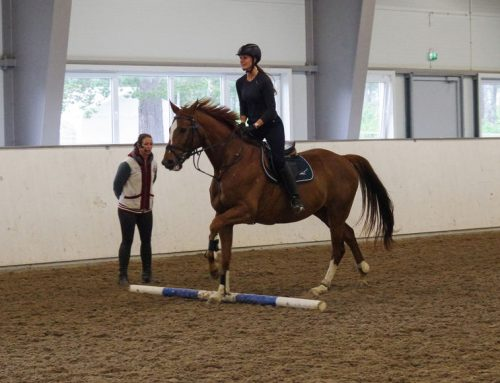 Har du en hest du vil videreutvikle?